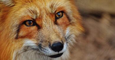 Cambiare il mondo incontrando lo sguardo di un animale